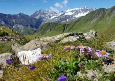 schweiz-wandern-fsardonahuette-calfeisental-wander-kathi-004